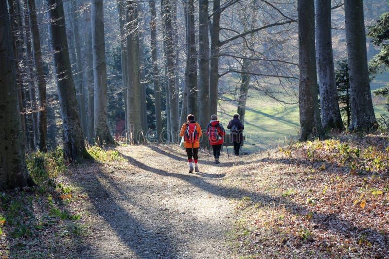 Paseo en el bosque imagen de archivo