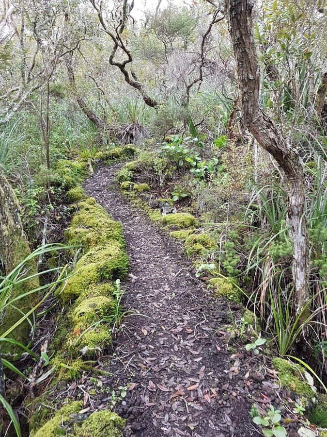 Paseo en una isla de Vulcano en Auckland foto de archivo libre de regalías