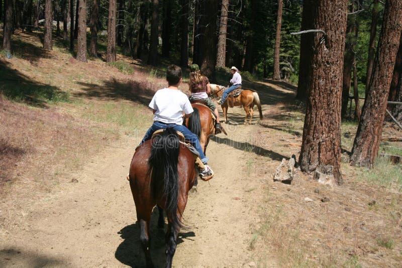 Paseo estable de la familia del caballo imagenes de archivo