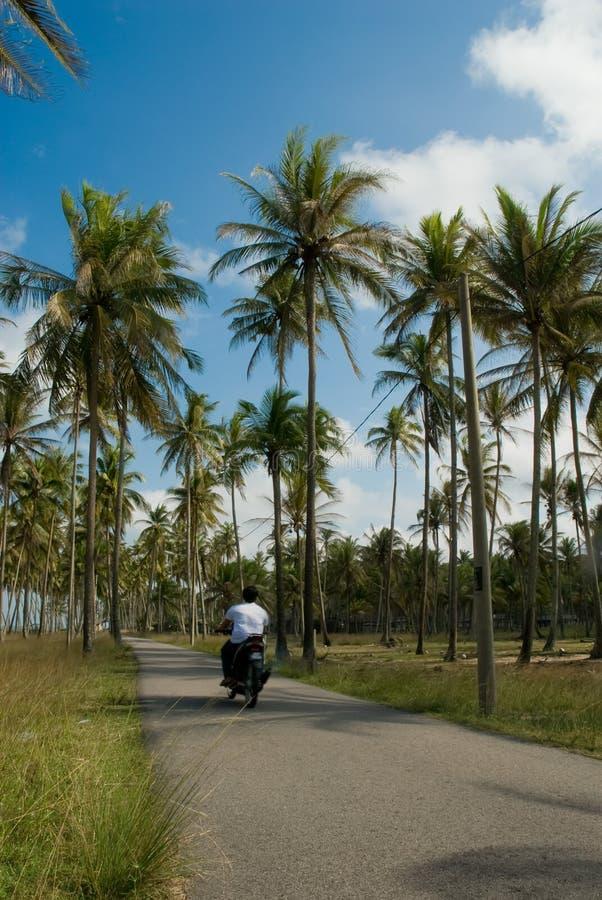 Paseo fácil entre árboles de coco fotografía de archivo libre de regalías