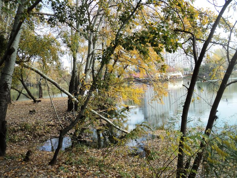 Paseo hermoso del paisaje por la tarde del otoño en el parque de la ciudad a lo largo de la orilla del lago imagen de archivo libre de regalías