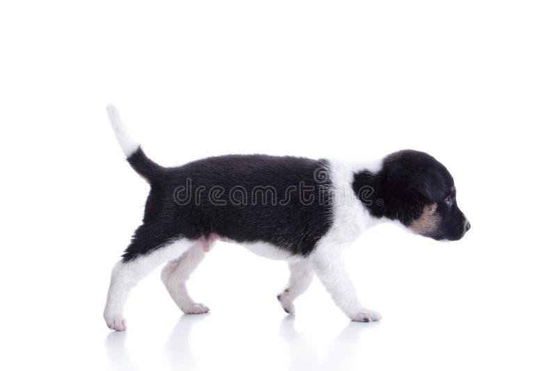Paseo lindo del perrito fotos de archivo libres de regalías