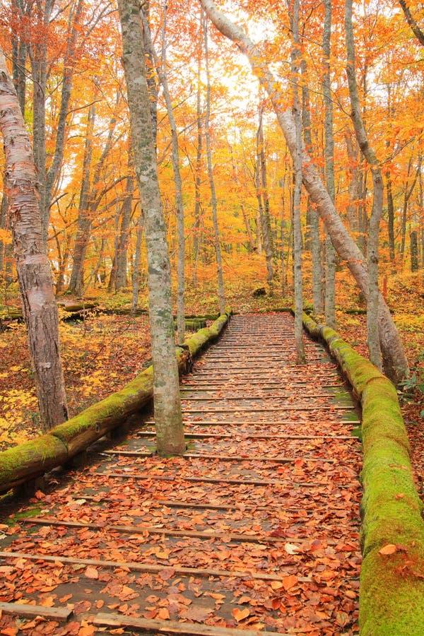 Paseo marítimo en bosque del otoño fotos de archivo libres de regalías