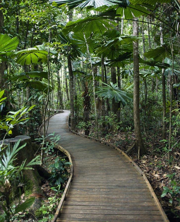 Paseo marítimo en selva tropical. foto de archivo libre de regalías