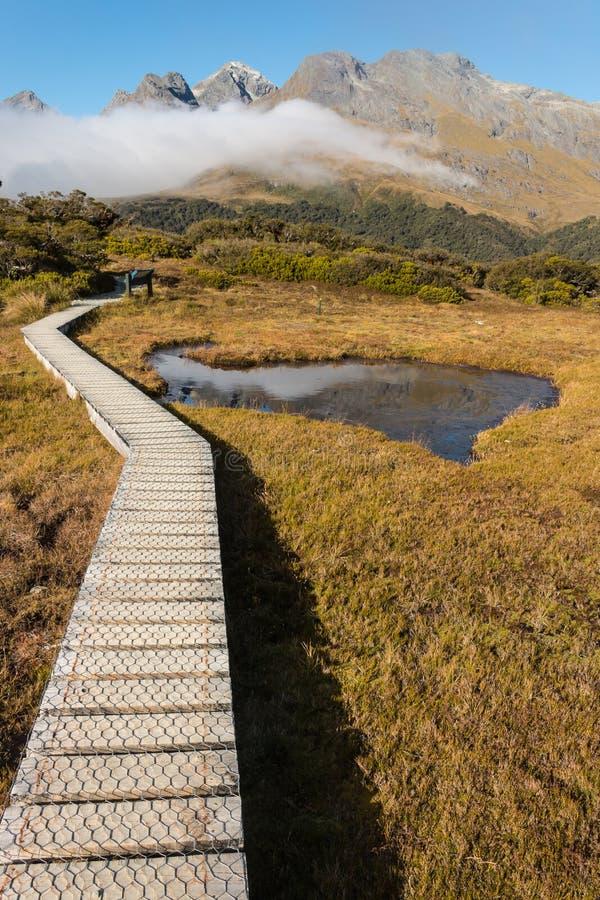 Paseo marítimo a través del humedal en el parque nacional de Fiordland imagen de archivo