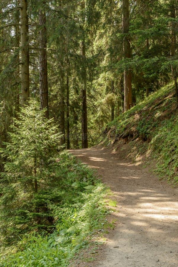 Paseo que dobla entre árboles, santo Jean de la naturaleza de la montaña de Gressoney, fotos de archivo
