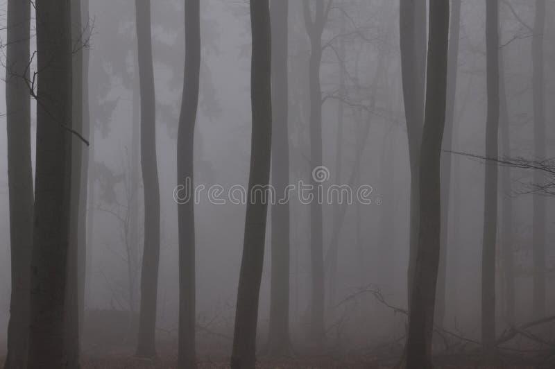Paseo a través del bosque de niebla de la haya imagen de archivo libre de regalías