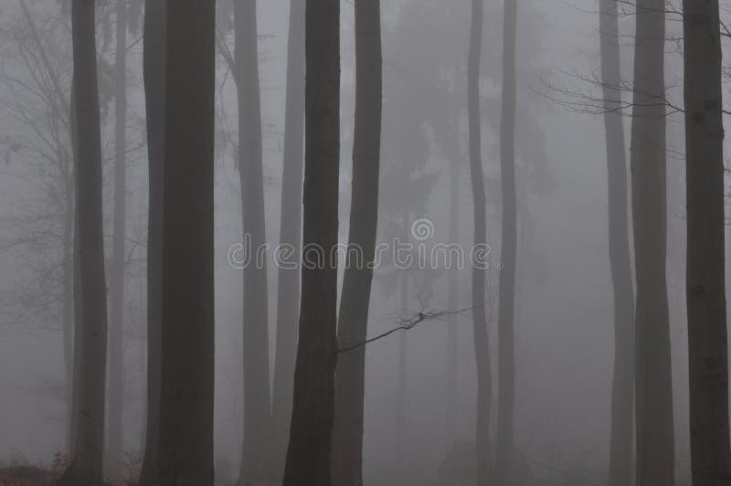 Paseo a través del bosque de niebla de la haya imagen de archivo