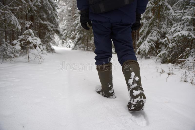 Paseo a través del bosque nevado foto de archivo libre de regalías