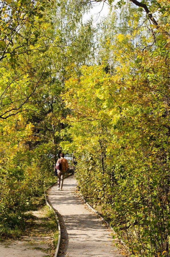 Paseo a través del parque del otoño con las charcas en un día soleado imagen de archivo libre de regalías