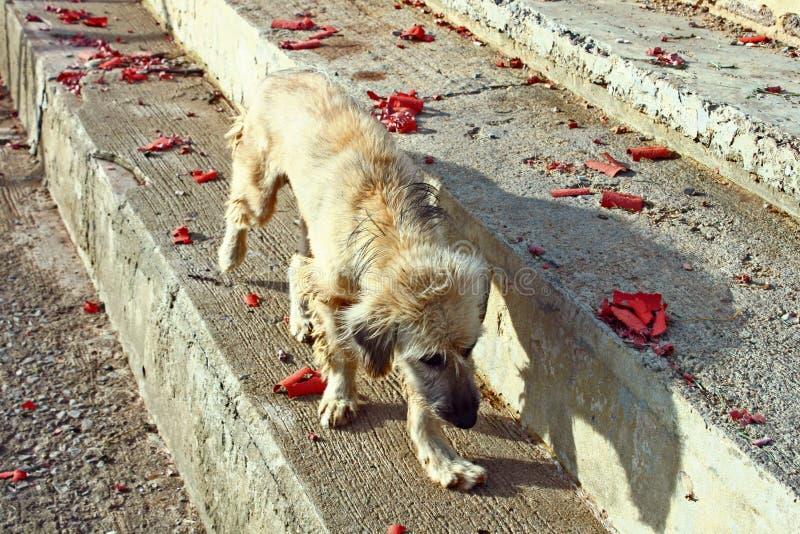 Paseo triste del perro en la hora de oro animal de los pasos concretos imagenes de archivo