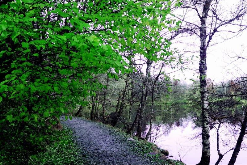 Paseo verde del lago imagen de archivo