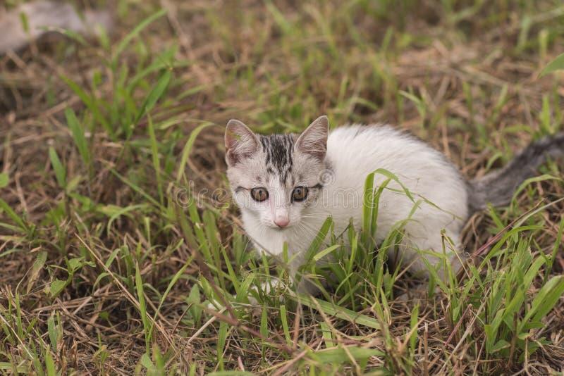 Paseo y juego de gato fotos de archivo