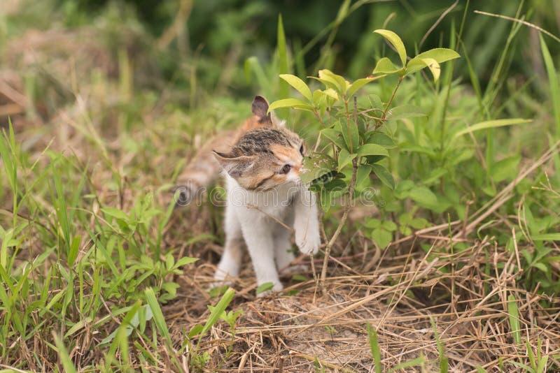 Paseo y juego de gato foto de archivo libre de regalías