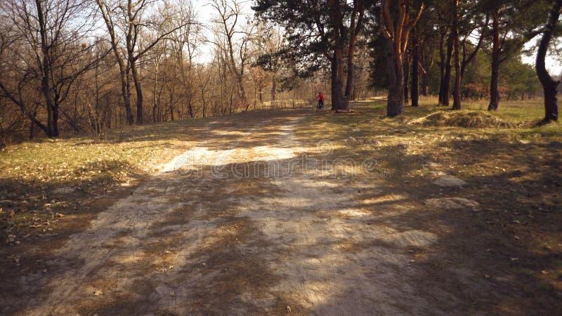 Paseos cauc?sicos de la mujer del deporte del ciclista a lo largo de la pista en el bosque en un d?a soleado de la primavera Mont fotografía de archivo