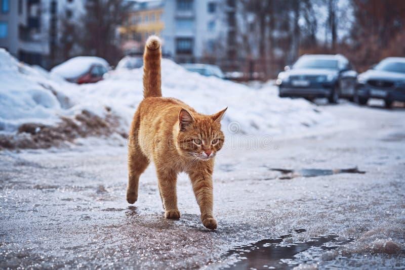 paseos de gato Ardiente-rojos en el asfalto y los charcos mojados fotos de archivo
