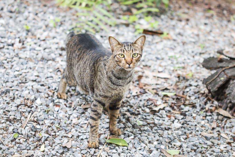 Paseos de gato lindos en el parque fotografía de archivo libre de regalías