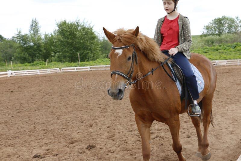Paseos de la muchacha en caballo en un campo fotografía de archivo