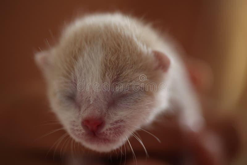 Pasgeboren katje in de palm van uw hand royalty-vrije stock foto's