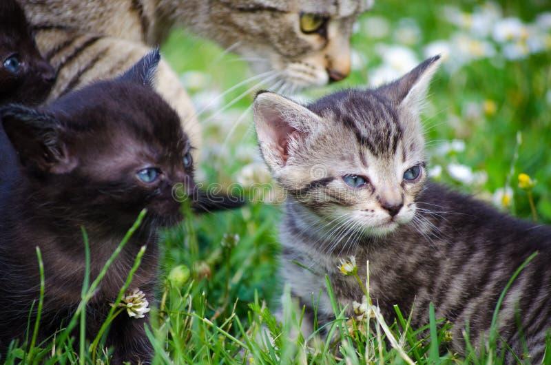 Pasgeboren katjes stock fotografie