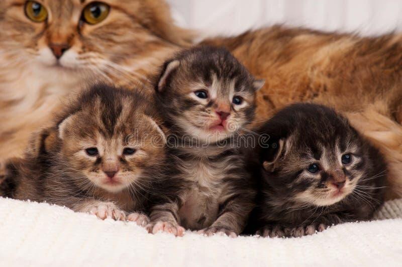 Pasgeboren katjes royalty-vrije stock foto