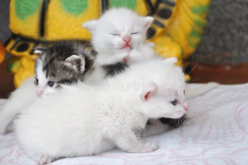 Pasgeboren katjes stock foto's