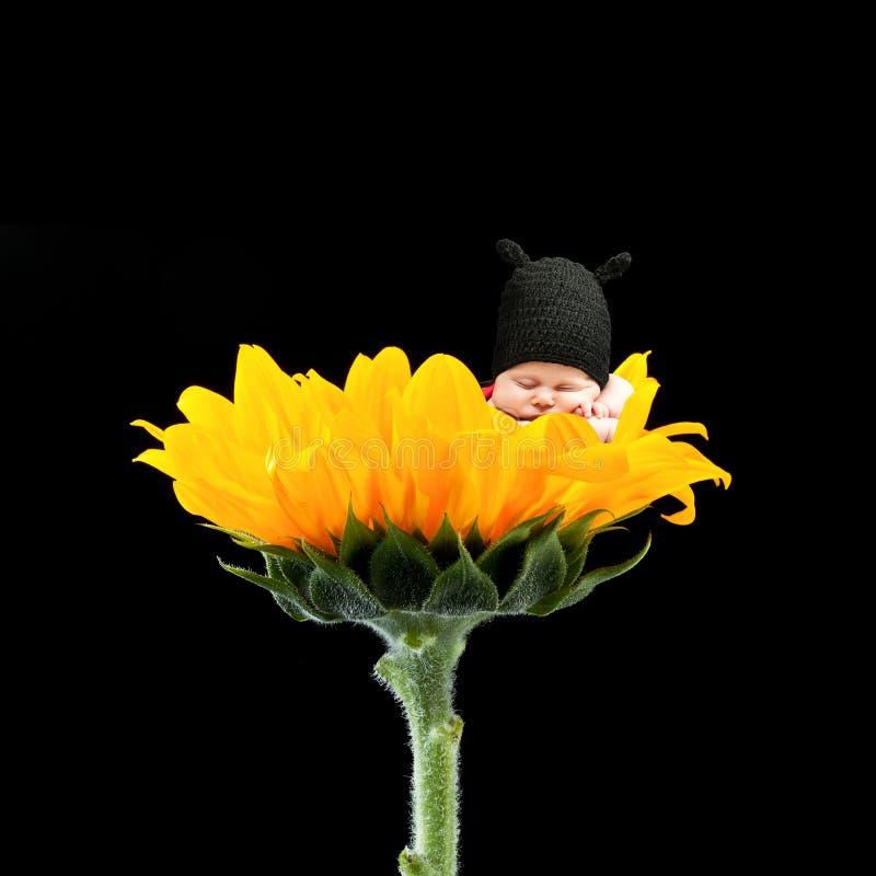 Pasgeboren op bloem stock foto