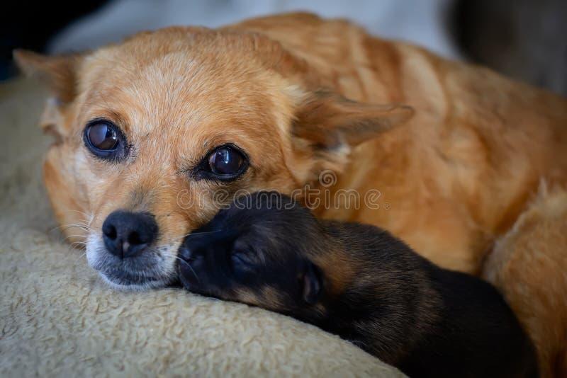Pasgeboren puppy van moeder Het concept moederinstinct het probleem van verdwaalde honden stock foto