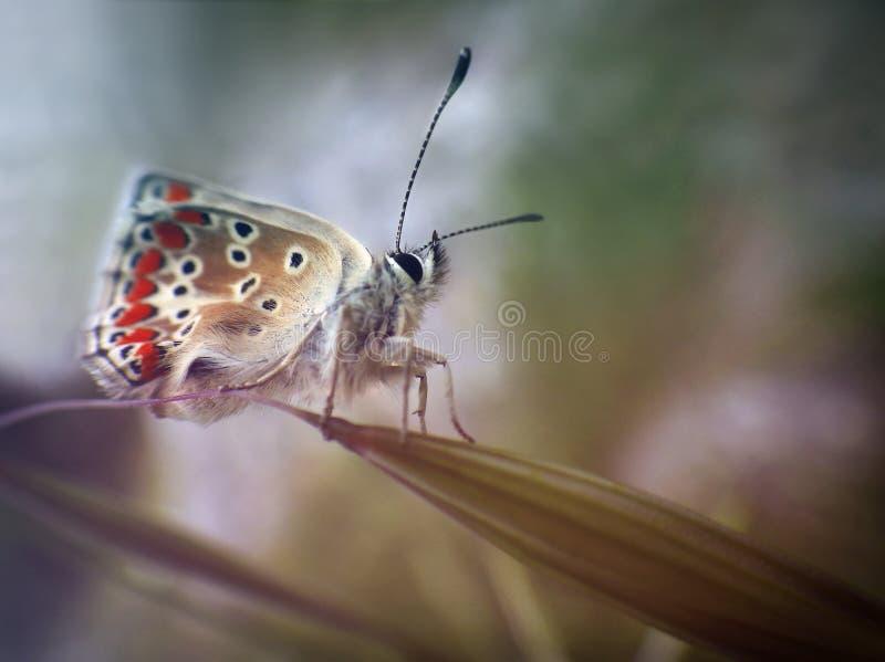 Pasgeboren Vlinder royalty-vrije stock afbeeldingen