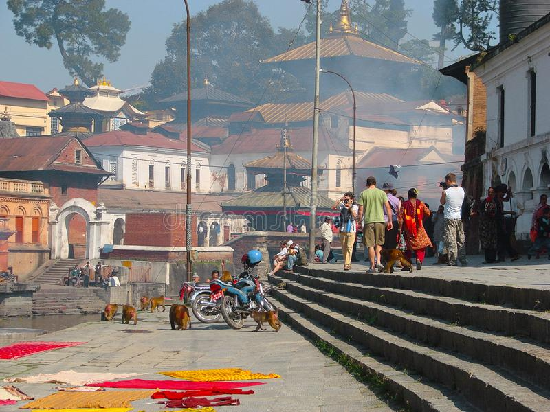 Pashupatinath复合体,神圣的印度寺庙 免版税库存图片