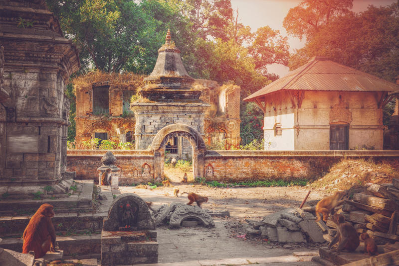 Pashupatinath Temple. Freely walk monkey. Votive temples and shrines in a row at Pashupatinath Temple, Kathmandu, Nepal royalty free stock photos