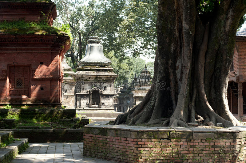 Pashupatinath Temple. Nepal, Kathmandu. Hindu Shrine Pashupatinath Temple. Nepal, Kathmandu royalty free stock photo
