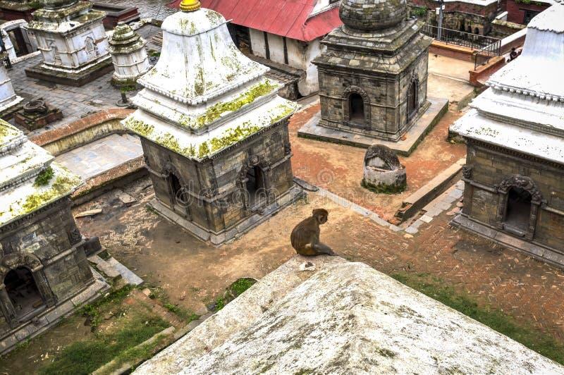 Pashupatinath Temple, Nepal stock image