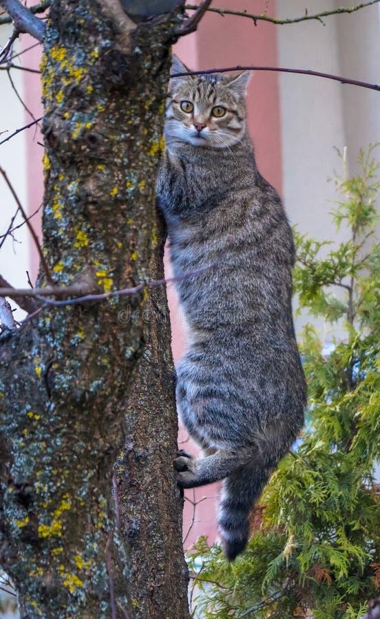 Pasiasty szary kota obsiadanie na drzewie zdjęcia stock