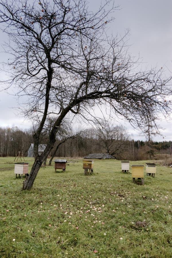 Pasieka jard z pszczo?a rojami w jesieni zdjęcie stock