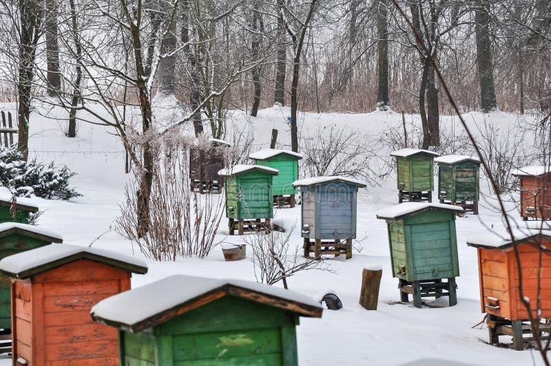 Pasieka, pszczoły różni kolory w rzędach roje, zakrywający w śniegu obrazy stock