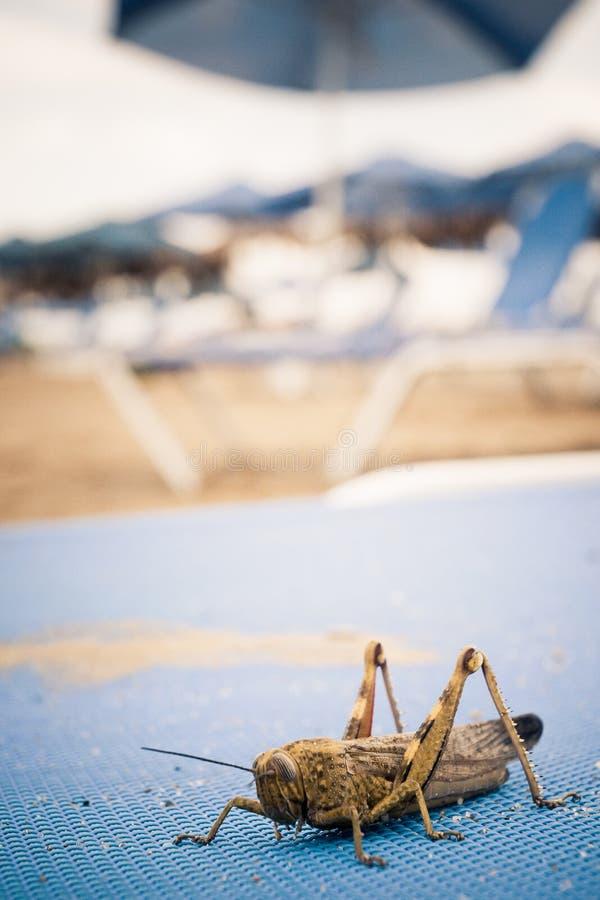Download Pasikonik Na Plażowym Lounger Zdjęcie Stock - Obraz złożonej z siedzi, scena: 28954500