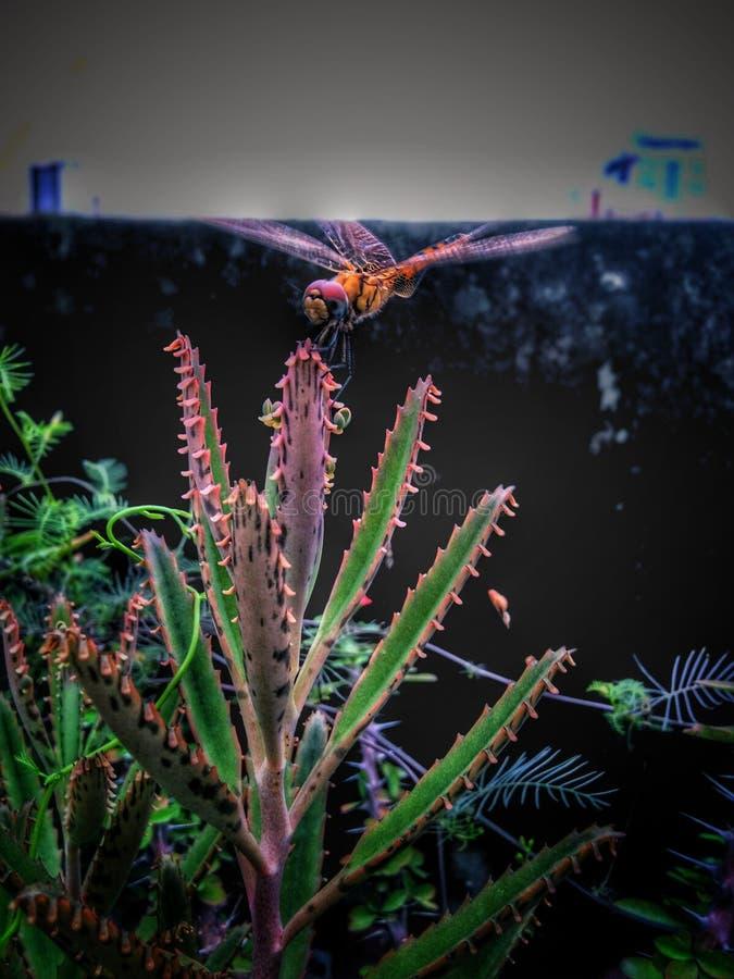 Pasikonik w roślinie obraz stock