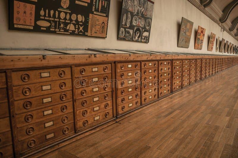 Pasillo con los gabinetes y exhibición fósil en la galería de la paleontología y de la anatomía comparativa en París imágenes de archivo libres de regalías