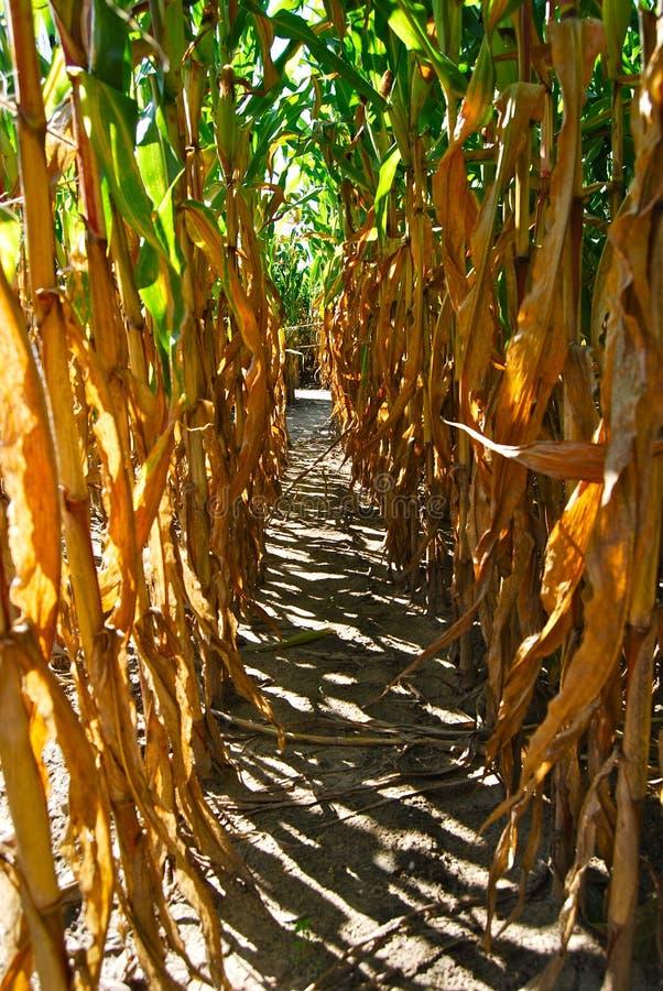 Pasillo del laberinto del tallo del maíz imagenes de archivo