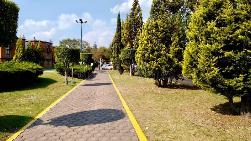 Pasillo a través de algunos árboles en Cholula México foto de archivo