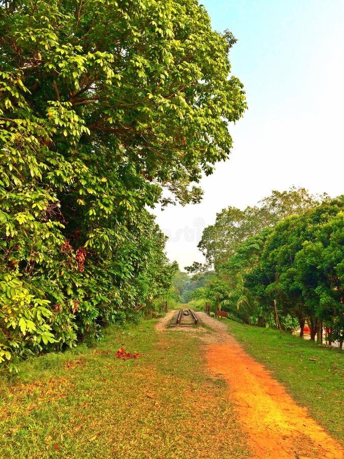 Pasillo verde, Singapur fotografía de archivo libre de regalías