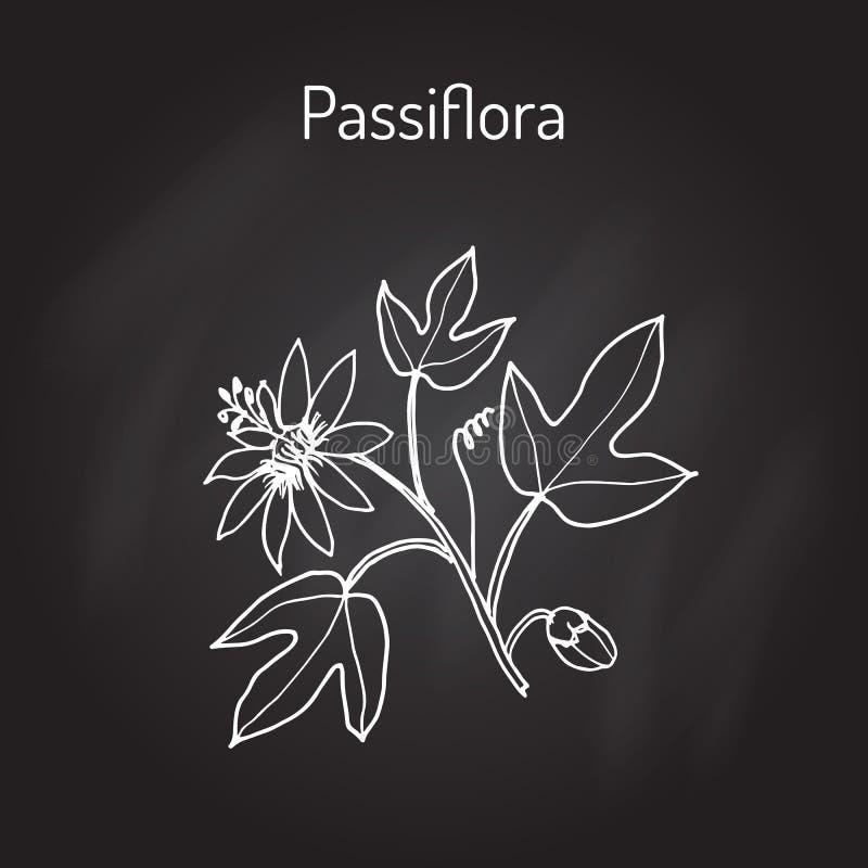 Pasionaria, o flores de la pasión stock de ilustración