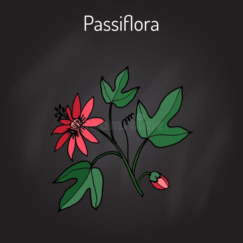 Pasionaria, o flores de la pasión libre illustration