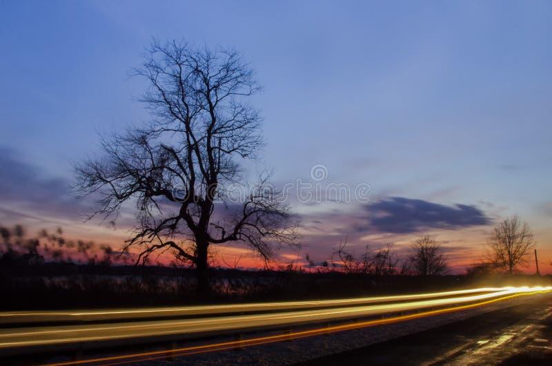 paskudne drzewo fotografia stock
