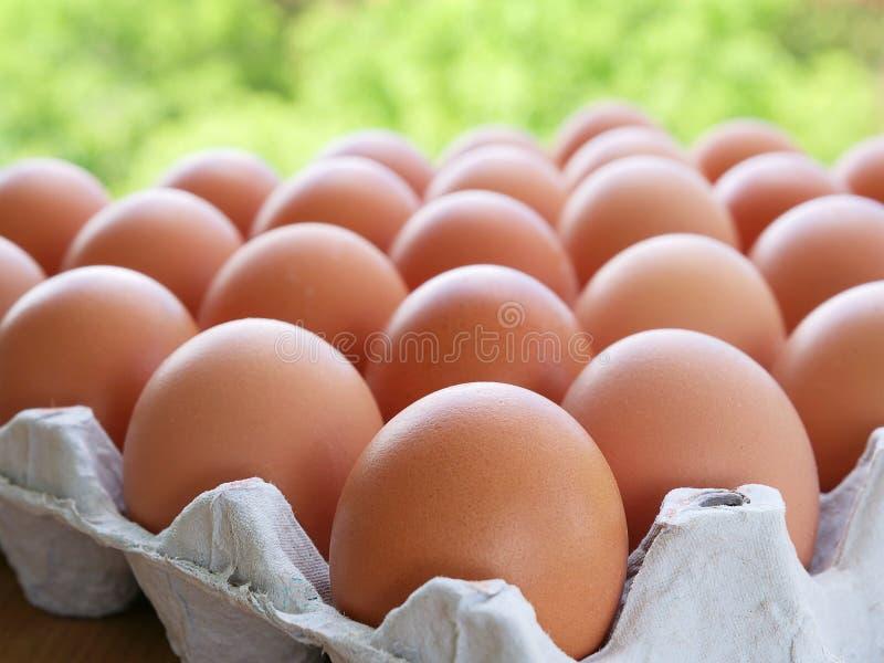 Pasm jajka z brązu eggshell fotografia stock
