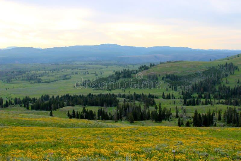 Pasmo górskie w Yellowstone parku narodowym fotografia royalty free