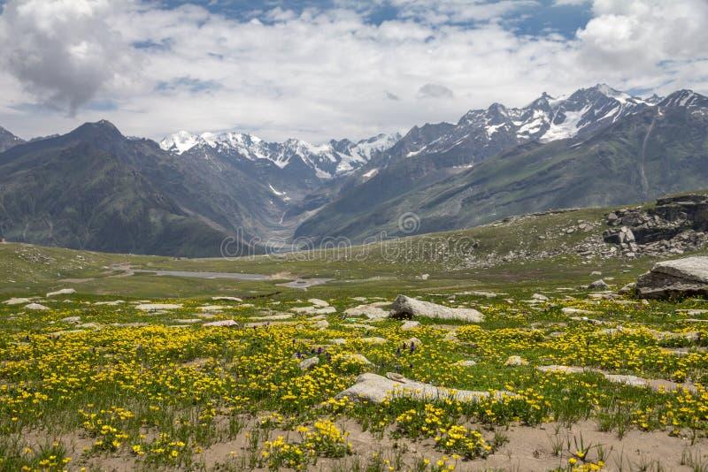 Paso amarillo brillante de Rohtang de la cubierta de las flores en Pir Pinjal Mountains fotografía de archivo libre de regalías
