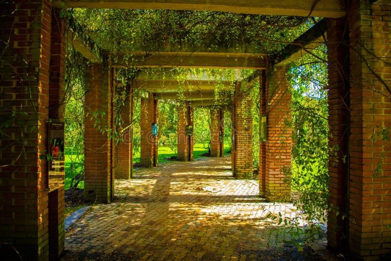 Paso de la naturaleza con los arcos y las ramas foto de archivo libre de regalías