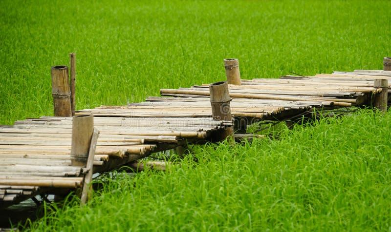 Paso de madera de bambú de la cruz del puente de la trayectoria sobre campo del arroz imagen de archivo libre de regalías